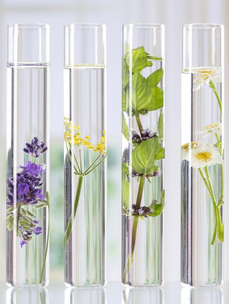 Lavendel Hydrolat, organic