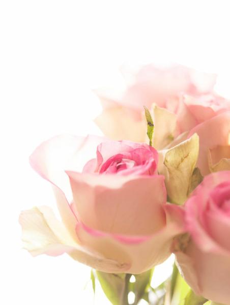 Rose garden PÖ, allergenfrei
