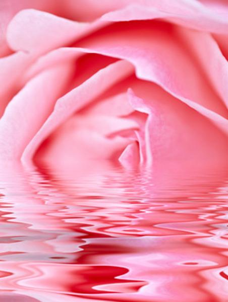 Rosenöl, naturidentisch
