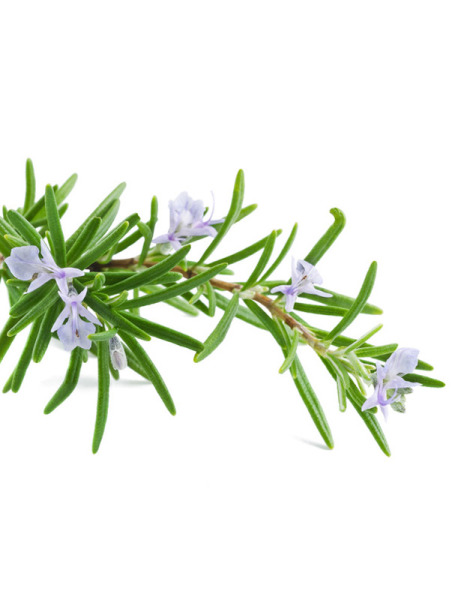 Rosmarin Antioxidans, geruchsarm (ökol)